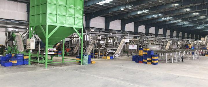 Vietnam cashew technology
