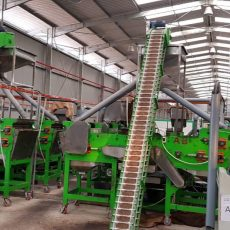 Cashew processing factory