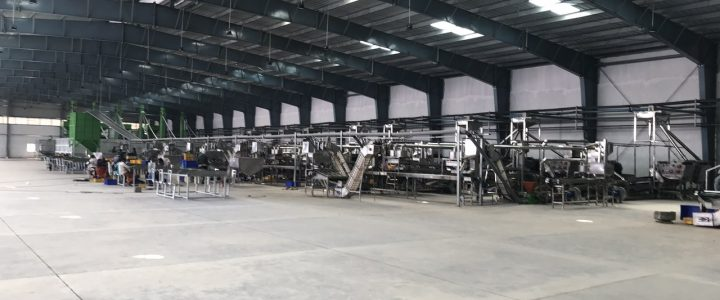 New model automatic cashew shelling line